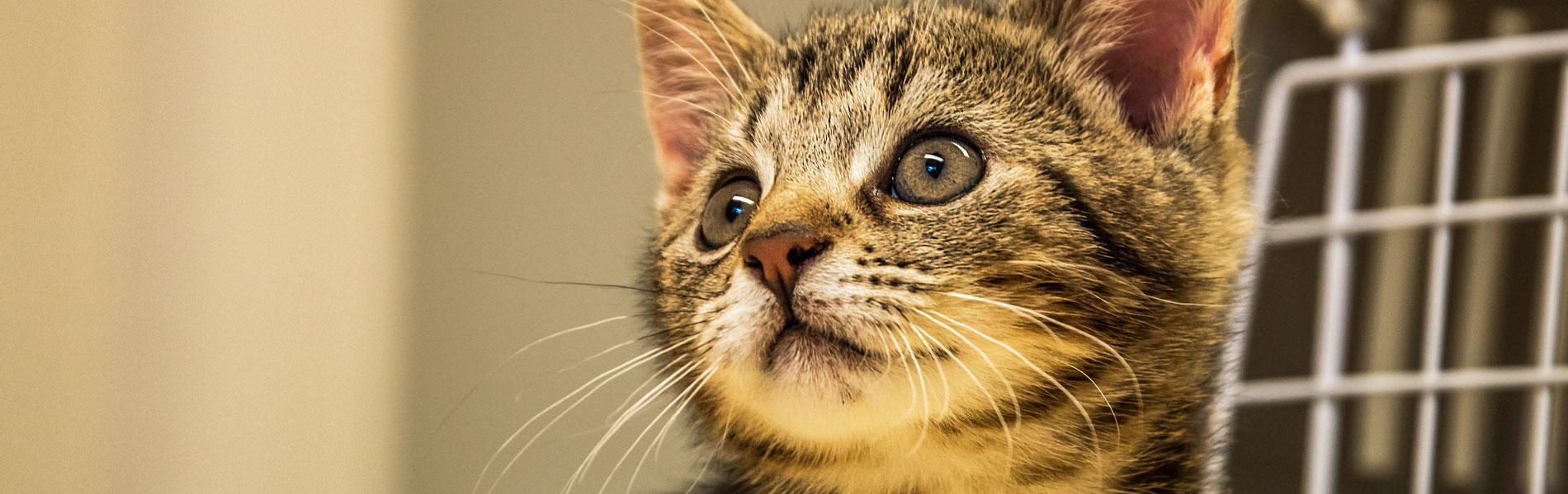 Tips voor het inenten van je kat