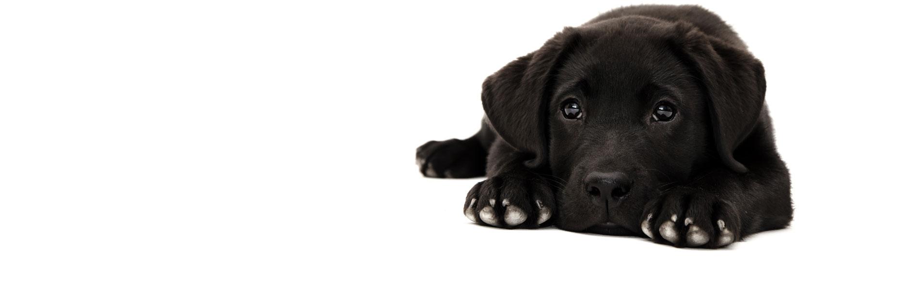Overvulde anaalzakken en ontsteking bij de hond