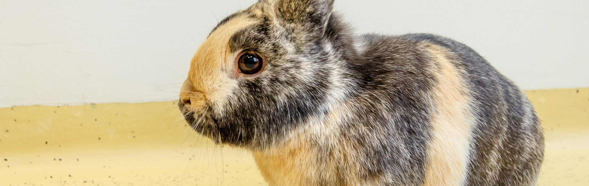 Tandheelkunde bij konijnen en knaagdieren