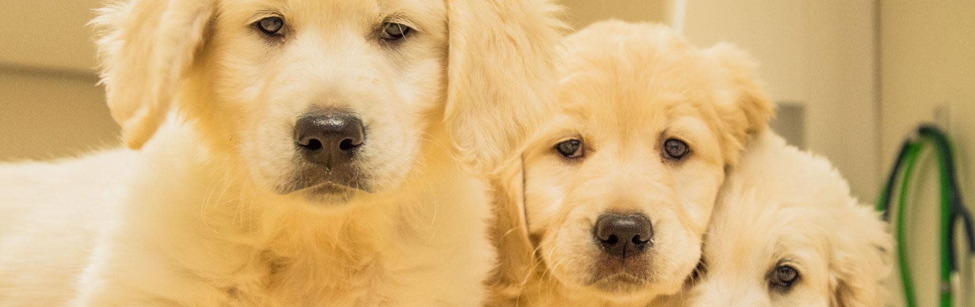 Consultatiebureau voor pups